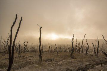 Reconnaître le crime d'écocide pour faire face à l'effondrement