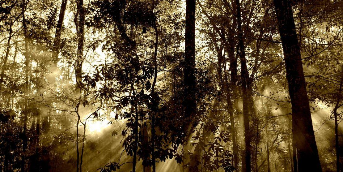 L' éthique des vertus : une condition pour opérer la transition environnementale