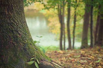 Transition écologique et liberté