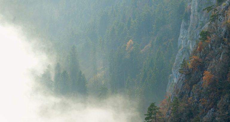 Sous le voile du langage: l'expérience du monde. Quels fondements pour une écologie incarnée ?