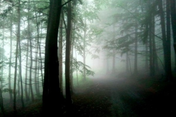 L'expérience esthétique à l'épreuve des valeurs de la nature: vers une esthétique environnementale intégrale