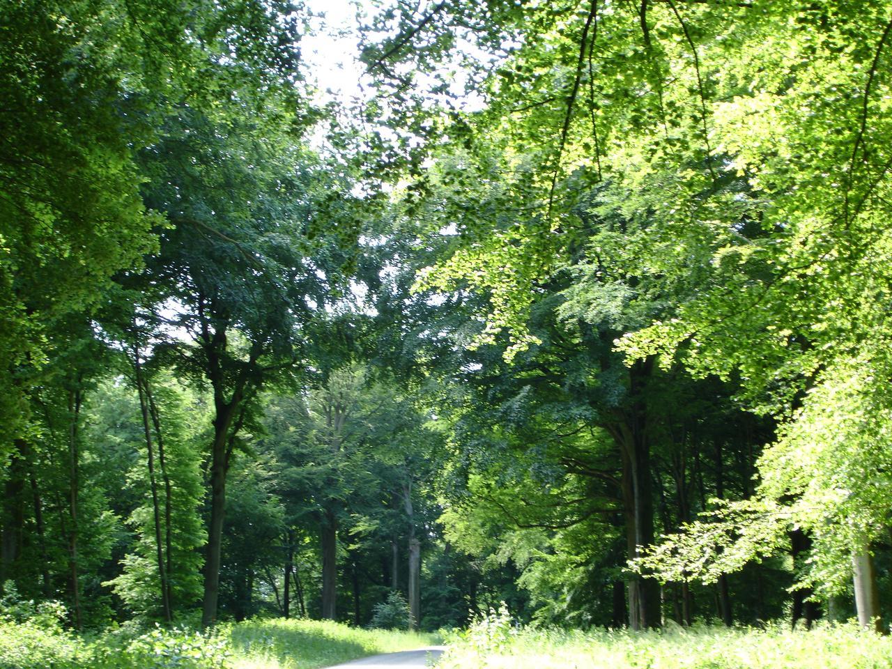 la vie des plantes : un nouveau paradigme 1280px-For%C3%AAt_dHesdin_secteur_de_la_Jatte