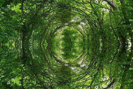 L'Arbre et la Forêt au regard de l'approche systémique