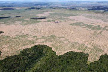 Politiques environnementales au Brésil :  Analyse historique et récents développements sous Jair Bolsonaro
