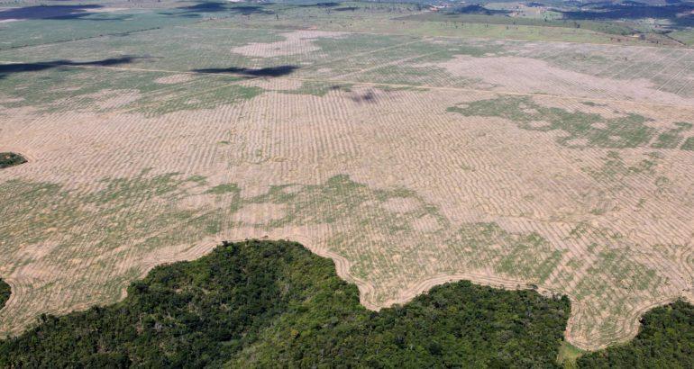 Politiques environnementales au Brésil:  Analyse historique et récents développements sous Jair Bolsonaro. Ben Meeus