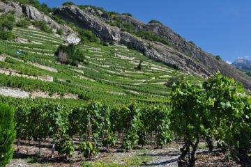 Entretien avec Véronique Ancey, vigneronne valaisanne