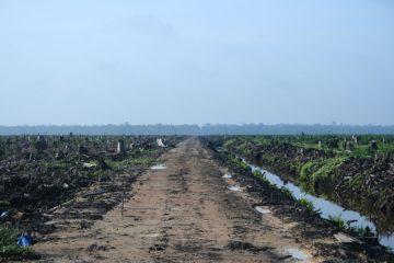 De la déforestation en Indonésie. Entretien avec Alain Karsenty