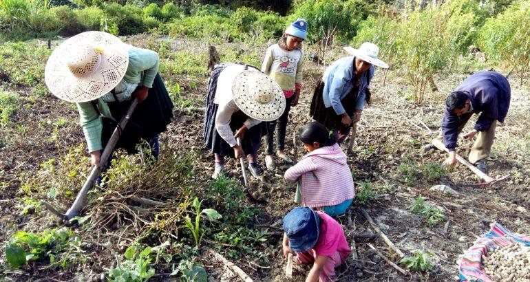 Les Organisations Économiques Paysannes, Indigènes et Originaires (OECAS) en Bolivie, une alternative d'économie solidaire en question
