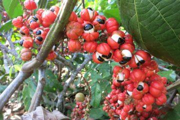 Introduction au dossier Repenser le statut des plantes